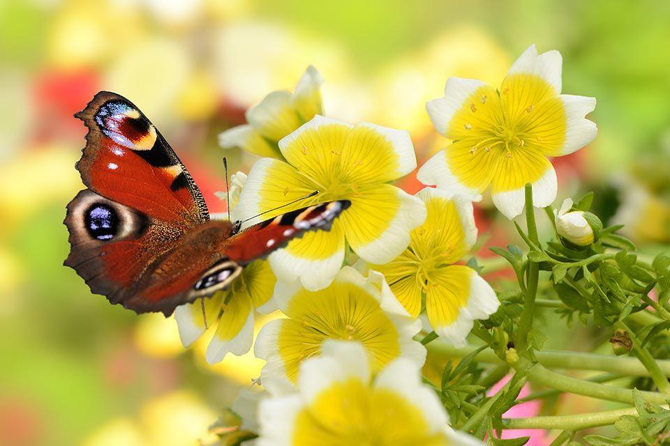 """alt=""""Schmetterling"""" title=""""© K.-U. Häßler - fotolia.com"""""""