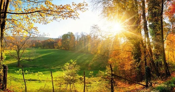 "alt=""Wald im Herbst"" title=""© Smileus - fotolia.com"""