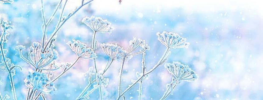 "alt=""Winterwiese"" title=""© Ju_see - stock.adobe.com"""